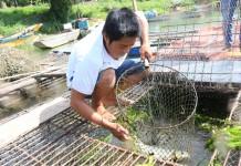 Nuôi cá lồng trên sông Son là hướng phát triển kinh tế ổn định của nhiều người dân xã Sơn Trạch, Bố Trạch.