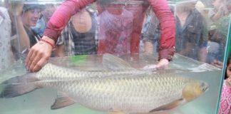 Cá Trắm sông Son là đặc sản mang đặc trưng riêng của vùng núi Phong Nha - Kẻ Bàng. (Ảnh: Nguồn nguoiduatin.vn)